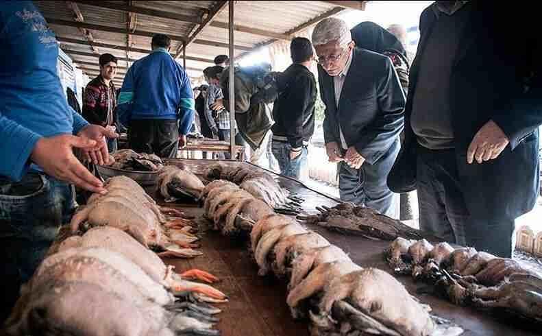دست مافیای شکار در جیب شکارچیان خردهپای مازندران